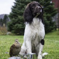reviderte-jaktproveregler-for-spaniels